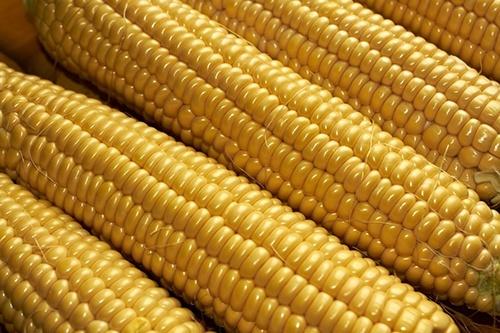 Котирування кукурудзи на світових майданчиках 25 липня подешевшали фото, ілюстрація