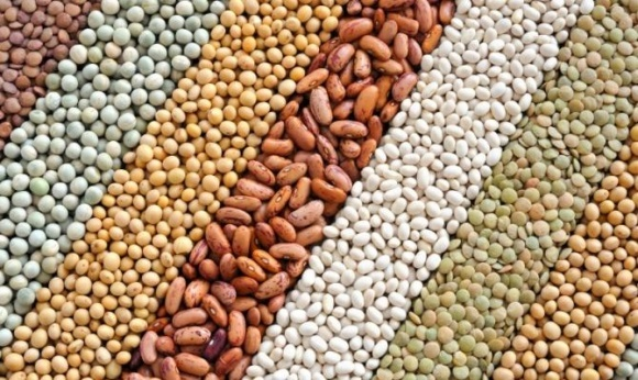 Экспорт масличных увеличен в Украине почти на четверть  фото, иллюстрация