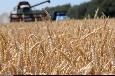 Завершується збирання урожаю-2018:  намолочено 69,3 млн тонн зерна фото, ілюстрація