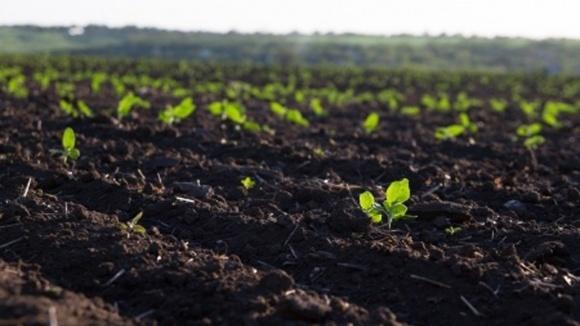 В 2018 году в Украине проведут всеобщую нормативно-денежную оценку сельхозземли  фото, иллюстрация