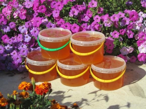 Бджоли не змогли зібрати травневий мед через холодну погоду фото, ілюстрація