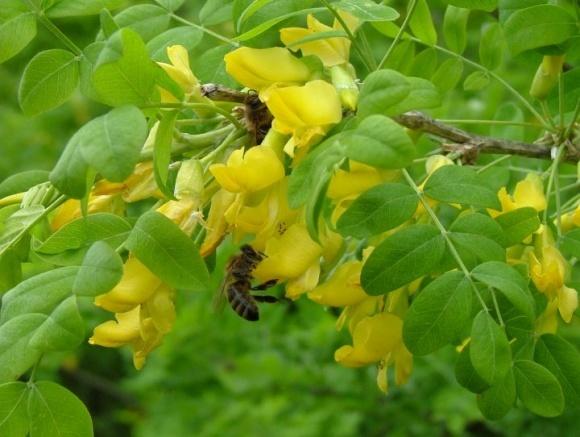 На Херсонщині підписано меморандум, покликаний вирішити проблему якості меду фото, ілюстрація