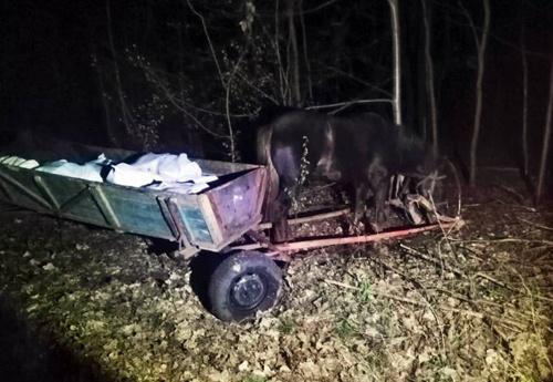 Трое украинцев пытались провезти в Беларусь 800 кг сала лошадьми фото, иллюстрация