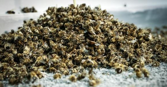 Держпродспоживслужба ініціює посилення відповідальності за отруєння бджіл фото, ілюстрація
