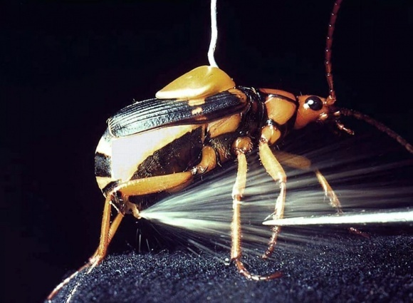 Правительство Германии обеспокоено сокращением популяции насекомых в стране фото, иллюстрация