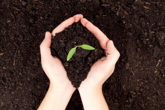 МХП знову отримав «екооскар» за проєкт із відновлення ґрунтів фото, ілюстрація