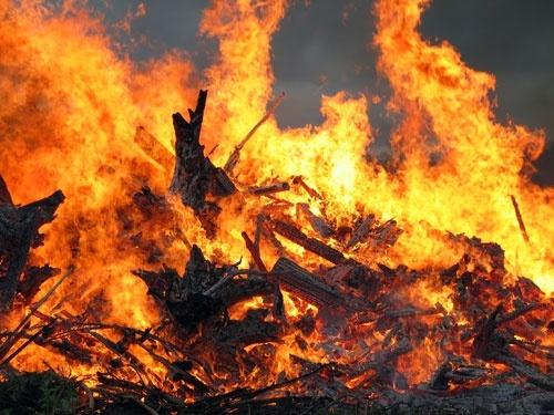 Запорожская область: в результате пожара погибли 180 голов поросят фото, иллюстрация
