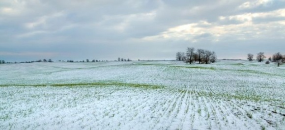 Аграрии Николаевщины надеются, что снег защитил посевы от морозов фото, иллюстрация