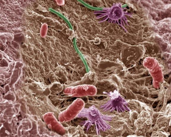 Провідні компанії світу працюють над використанням бактерій в агрогалузі фото, ілюстрація