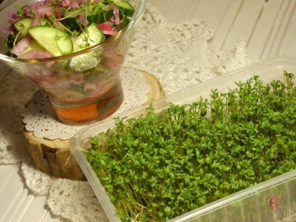Новые фуд-тренды: как вырастить микрозелень в домашних условиях? фото, иллюстрация