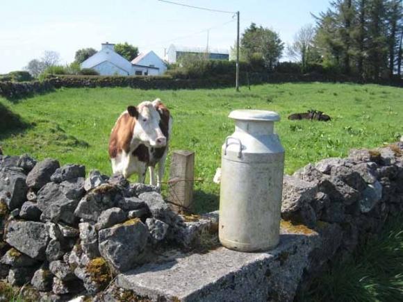 Європейцям до смаку українське молоко фото, ілюстрація