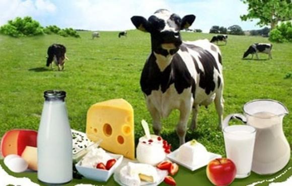 Молочный кризис: Полтавская, Донецкая и Киевская области активно вырезают коров фото, иллюстрация