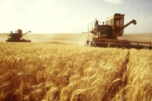 800 т зернових - не межа урожаю на Дніпропетровщині фото, ілюстрація