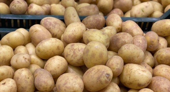 На ринок надійшла перша вітчизняна молода картопля фото, ілюстрація