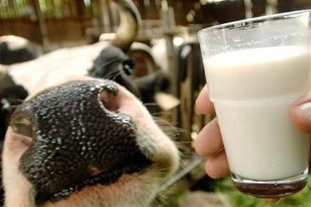 У Європі зберігається тенденція зниження виробництва молока фото, ілюстрація