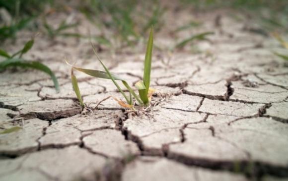 У Молдові 60% озимих посівів постраждали від посухи фото, ілюстрація