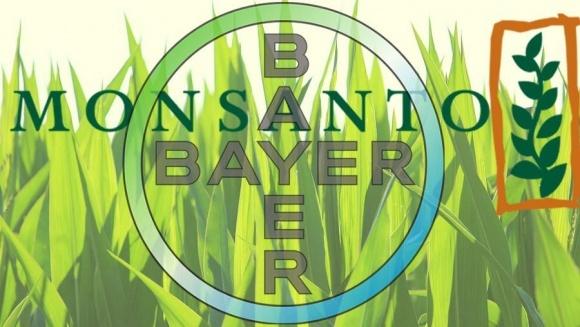 В Индии широко обсуждается альянс Monsanto и Bayer фото, иллюстрация