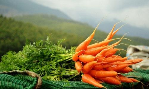 Європейський ринок моркви знаходиться у повному колапсі фото, ілюстрація