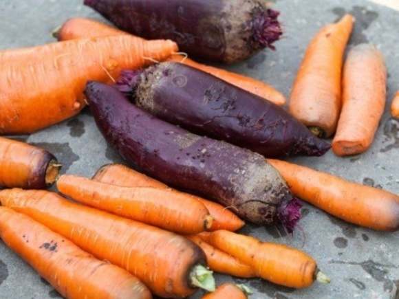 В Україні дешевшають морква та буряк фото, ілюстрація