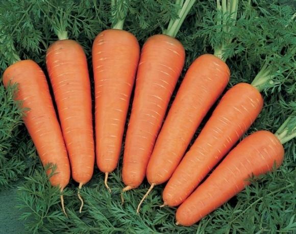 Фермери можуть втратити п'яту частину врожаю моркви фото, ілюстрація