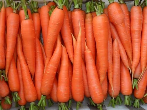За два тижні ціна на моркву впала на 12% фото, ілюстрація