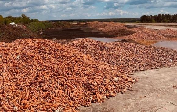 Обанкротившийся фермер вывез на свалку тонны моркови фото, иллюстрация