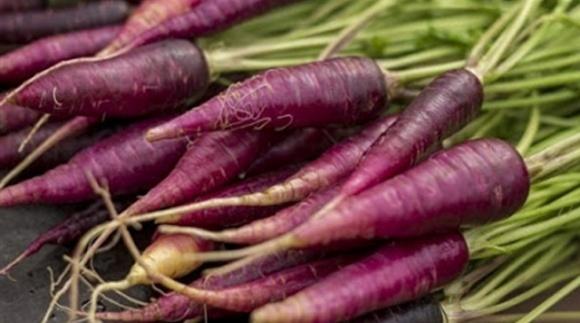 Перша морква була незвичного фіолетового кольору фото, ілюстрація