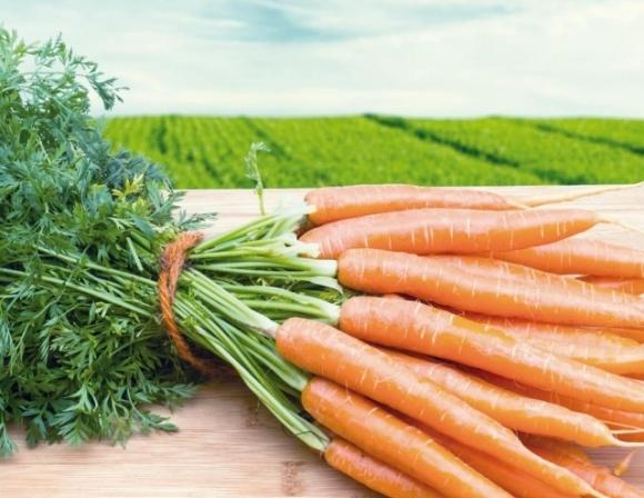 Херсонські аграрії, що посіяли моркву серед зими, очікують на врожай уже до кінця березня фото, ілюстрація