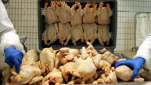 Росія заборонить понад 10 європейським країнам імпортувати м'ясо і яйця фото, ілюстрація