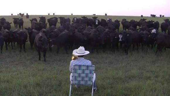 Пастух, який грає для своїх корів на трубі (ВІДЕО) фото, ілюстрація