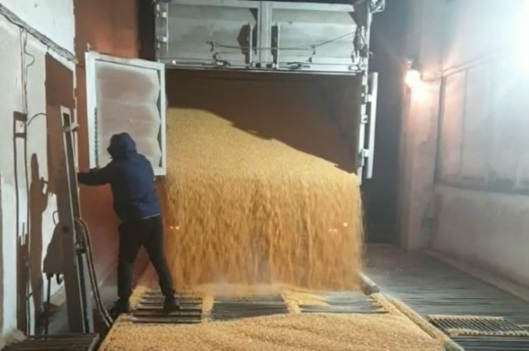НАБУ знову запобігло розкраданню зерна на філії Держрезерву фото, ілюстрація