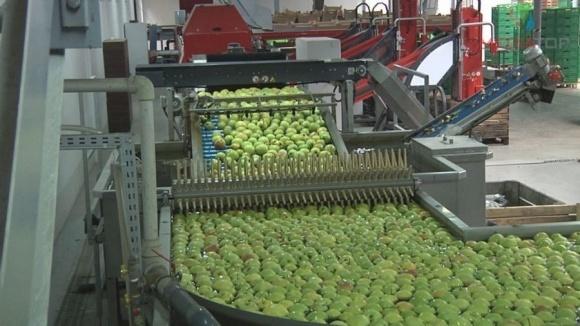 """Яблоки """"Гадз"""" покоряют полки зарубежных супермаркетов фото, иллюстрация"""