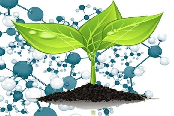 Исследователи разработали наноудобрение, что защищает растения от грибковых патогенов  фото, иллюстрация