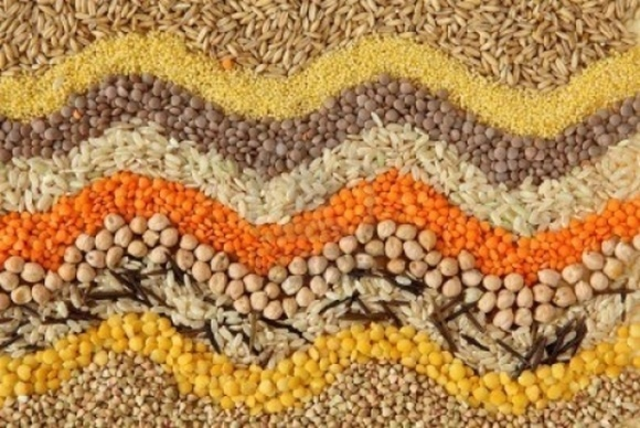 В Европе признают качество украинских семян фото, иллюстрация