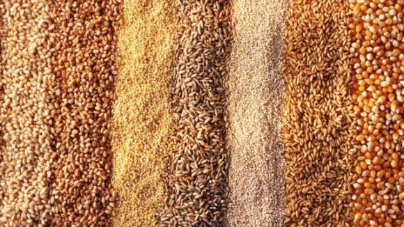 ВРУ в целом приняла закон о сертификации семян фото, иллюстрация