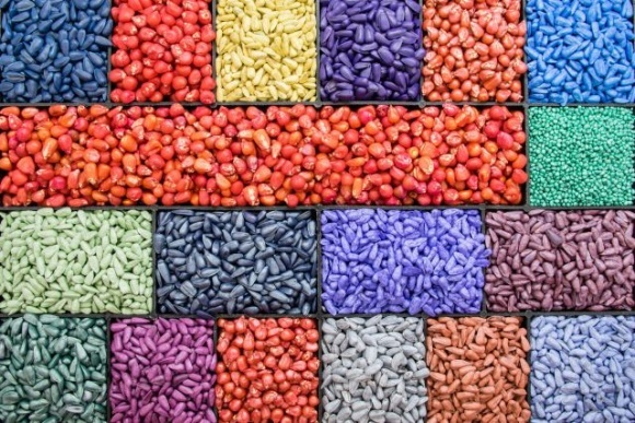 Отечественный экспорт семян в 2020 году увеличился на 30%. Это лучший результат за последние 10 лет, — ННЦ фото, иллюстрация