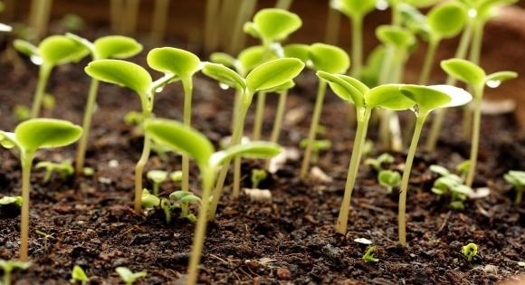 Аграріям радять будувати заводи з виробництва мікорізоутворюючих препаратів фото, ілюстрація
