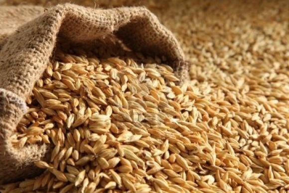 Виробники насіння не несуть відповідальність за придбаний контрафакт фото, ілюстрація