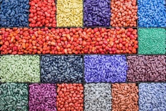 Чи потрібно перевіряти протруєне насіння? фото, ілюстрація