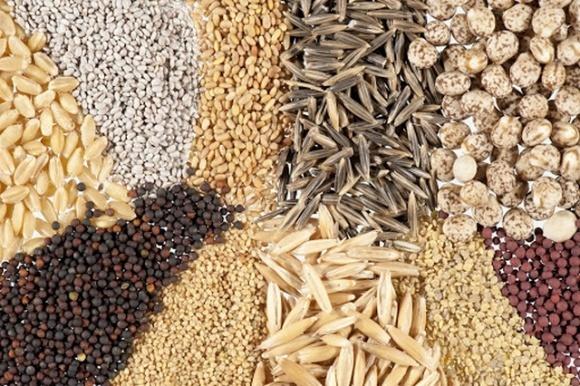 Увеличение импорта семенного материала в 2019 году обусловлен повышением спроса со стороны агрохолдингов, — Институт аграрной экономики фото, иллюстрация