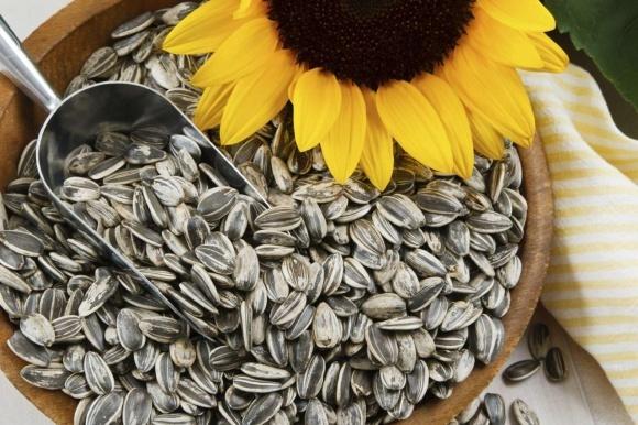 Сільгоспвиробники Херсонщина ігнорують закони агрономії, - експерт фото, ілюстрація