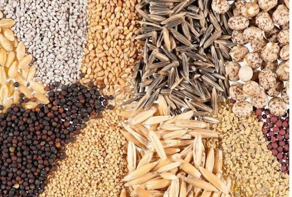 Рада ЄС підтримала рішення щодо визнання української системи сертифікації насіння фото, ілюстрація
