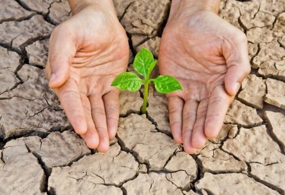 Вчені винайшли спосіб, як захистити насіння від посухи фото, ілюстрація