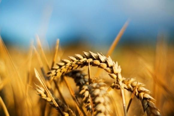 Расходы на отечественную аграрную науку сократят в половину фото, иллюстрация
