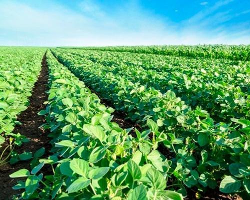 На украинский рынок поступила первая партия органических инокулянтов для пшеницы фото, иллюстрация