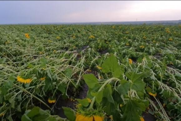 Эксперты оценили последствия непогоды весенне-летнего сезона для аграриев фото, иллюстрация
