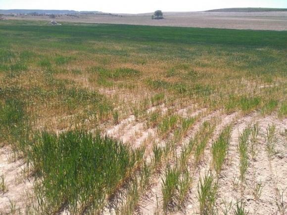 Посуха ускладнює підготовку ґрунту під висів озимих культур фото, ілюстрація