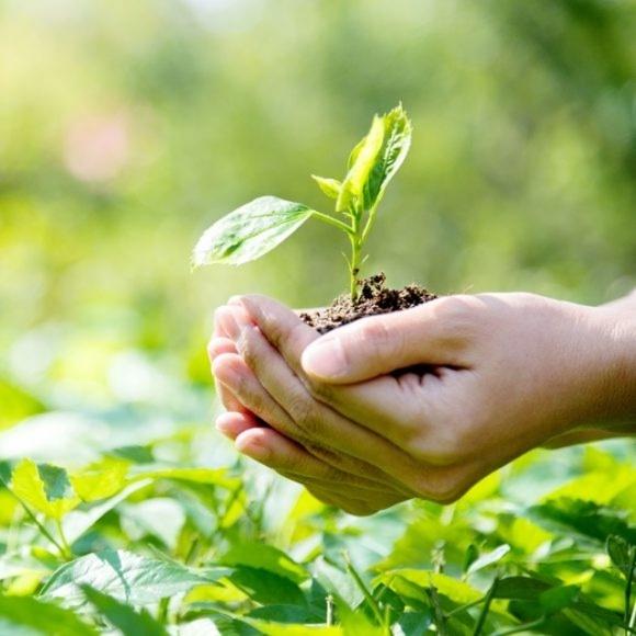 Германия сокращает объемы использования пестицидов в сельском хозяйстве фото, иллюстрация