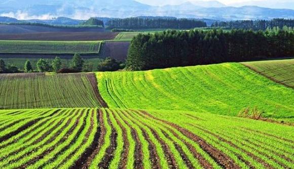 Мінекономіки поінформувало про стан впровадження ринку землі  фото, ілюстрація