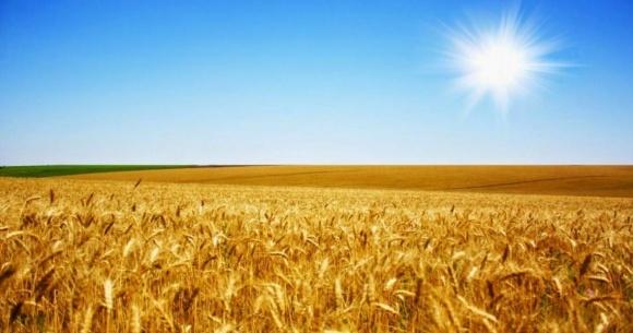 Херсонські сільгоспвиробники на фінішній прямій збирання ранніх зернових фото, ілюстрація
